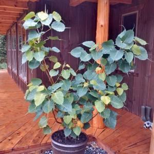 bodhi bush SSH